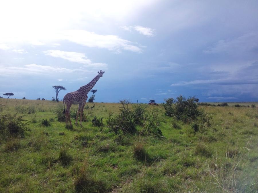 Girafa!!!