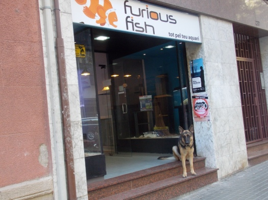 Furious fish or Furious dog?