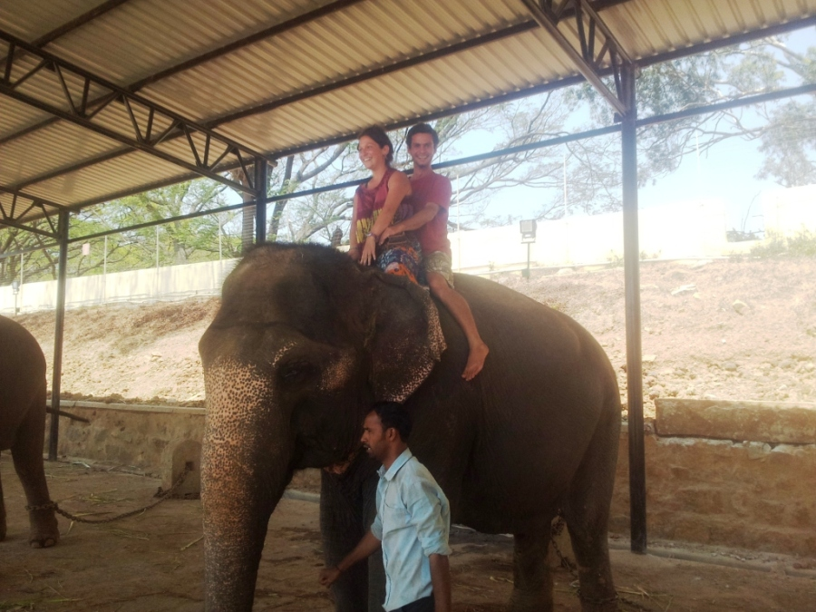 Elephant Trip in Mysore