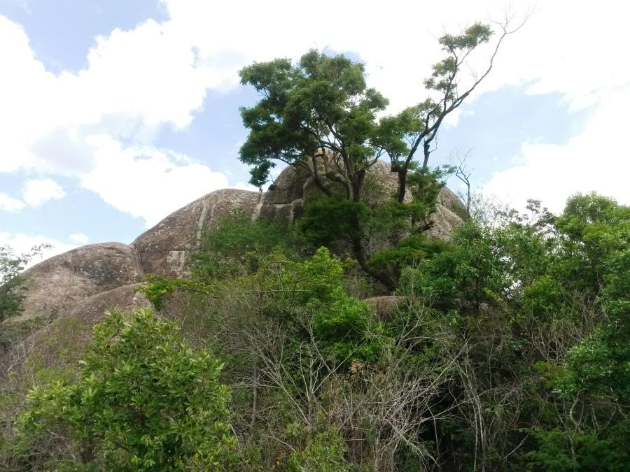 A Árvore e a Pedra