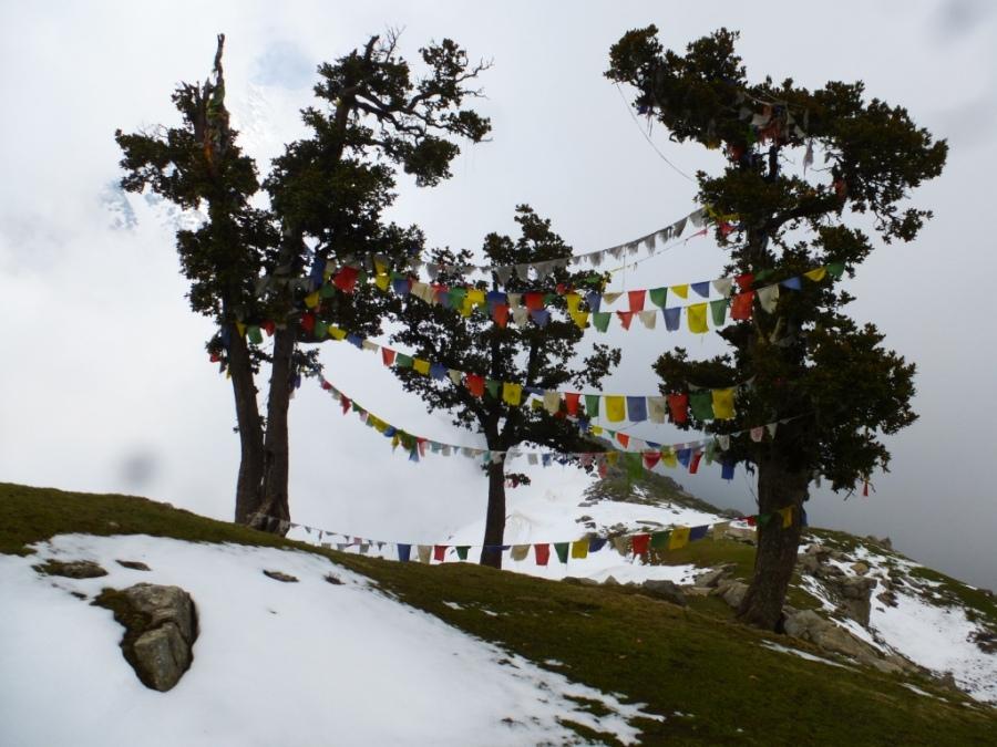 Prayer Flags in Laka Got, Dharamsala